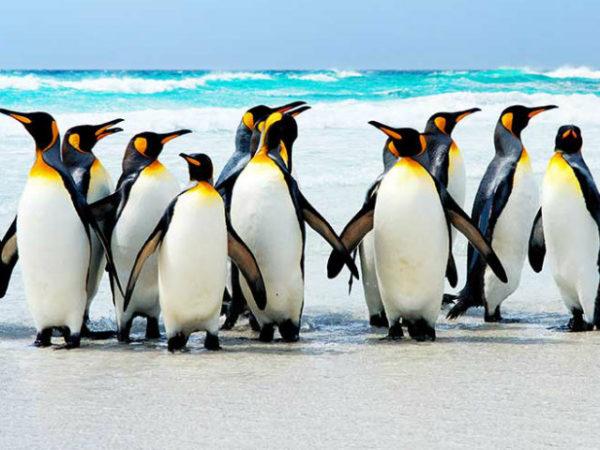 pinguino-playa
