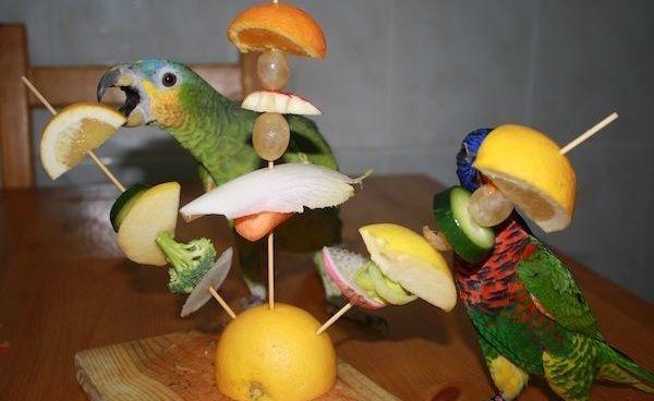comparte-la-vida-con-tus-mascotas-aves-frutas