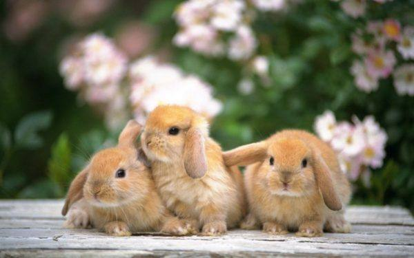 comparte-la-vida-con-tus-mascotas-conejos