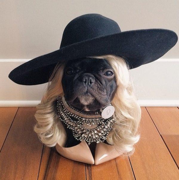 bulldog-frances-disfrazado