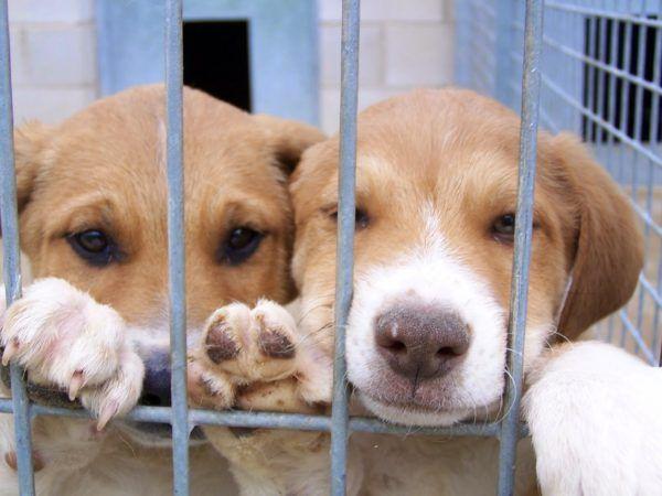 la-responsabilidad-de-tener-una-mascota-abandonos