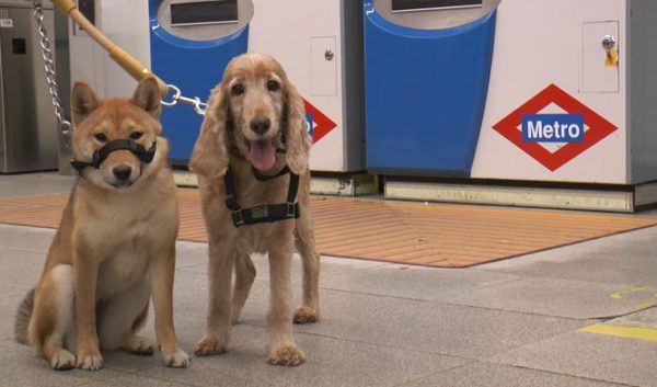 la-responsabilidad-de-tener-una-mascota-metro