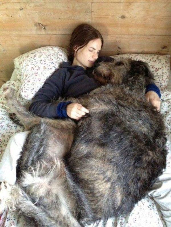 comunicacion con perros