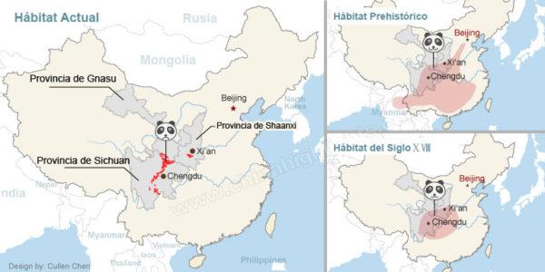 Habitat del Oso Panda Gigante. Pérdida de su Ecosistema