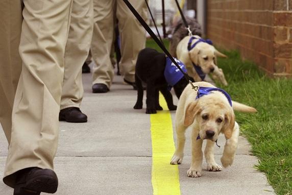 perro-guia-cachorros-entrenos-2
