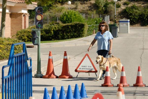 Entrenamiento de los Perros Guía