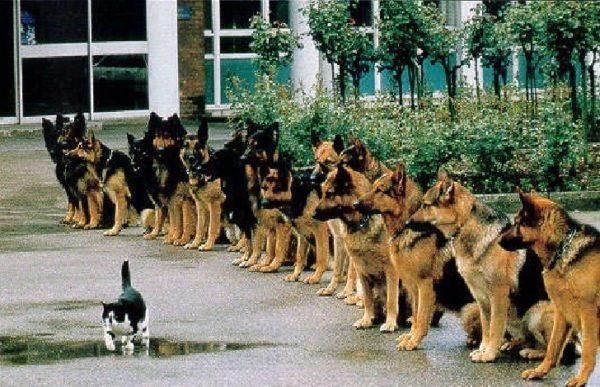 Un buen perro guía no puede distraerse con NADA