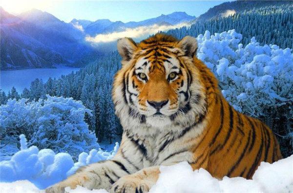 las-mejores-fotos-de-tigres-foto-5