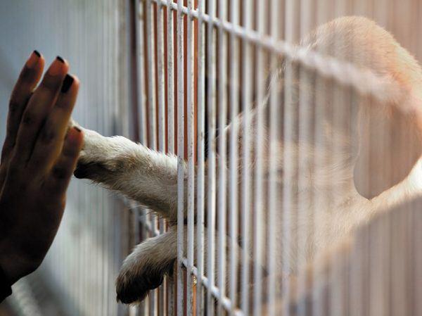 adopcion de perros