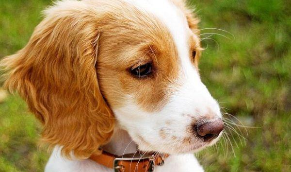 adopcion perros
