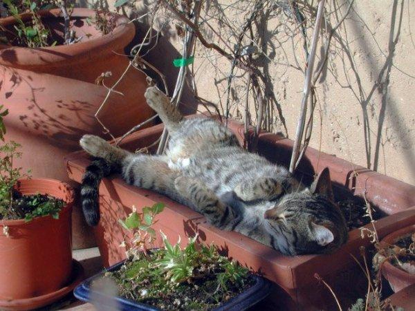 fotos-de-gatos-graciosos-gato-dormido-en-una-maceta
