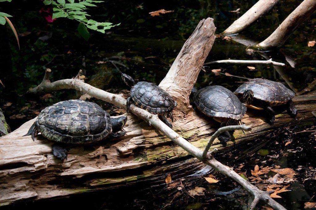 cuidados-tortugas-terrestres-alojamiento