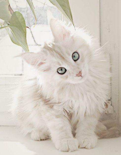 nombre para gatos hembras
