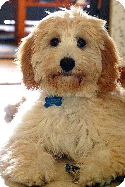nombre perros machos