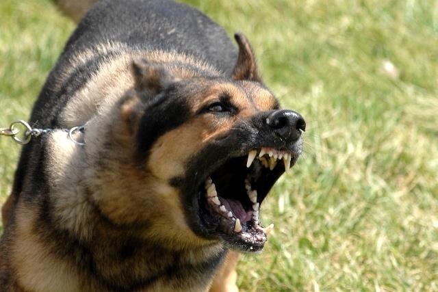 Reducir-ladrido-de-perros-con-entrenamiento-manual