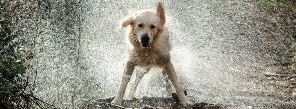 cuidados-de-mascotas-en-invierno-perro-mojado