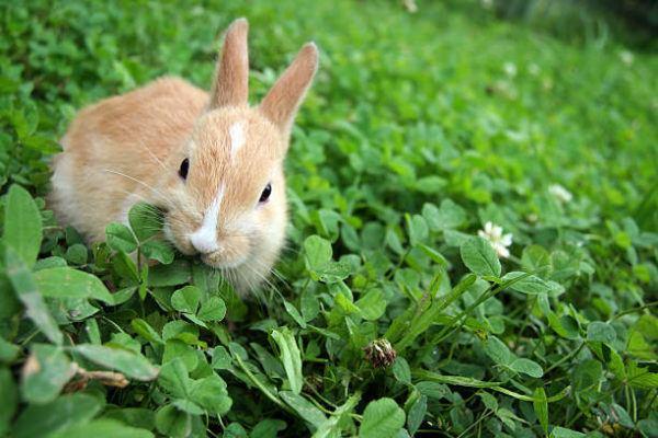 Alimentacion conejos