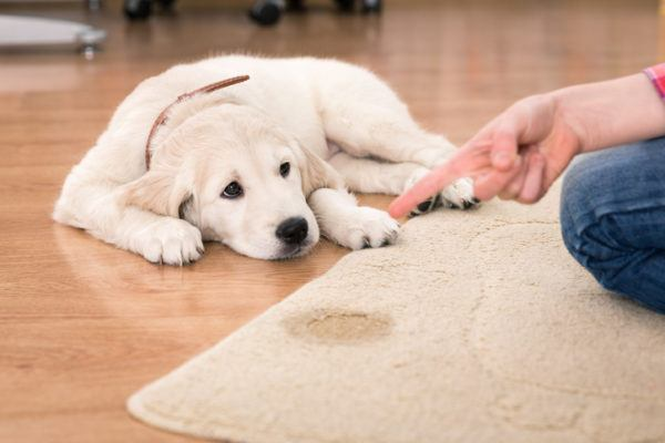 Consejos educar cachorro