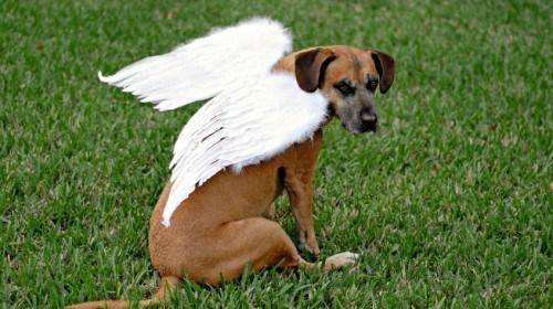 que-hacer-cuando-muere-tu-perro