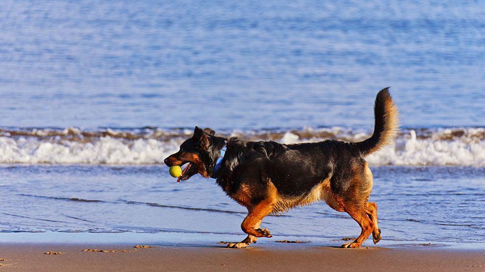 14-playas-de-espana-para-ir-con-tu-perro-playa-punta-del-riu