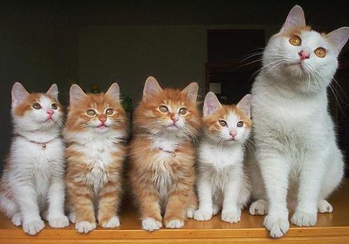 nombres-curiosos-y-extranos-para-mascotas-gatos