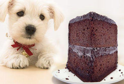que-comidas-de-humano-pueden-comer-los-perros-dulces-prohibidos