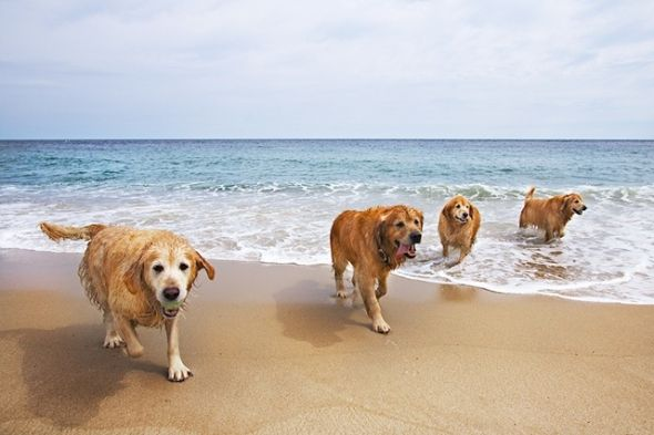 playa Rubina perros