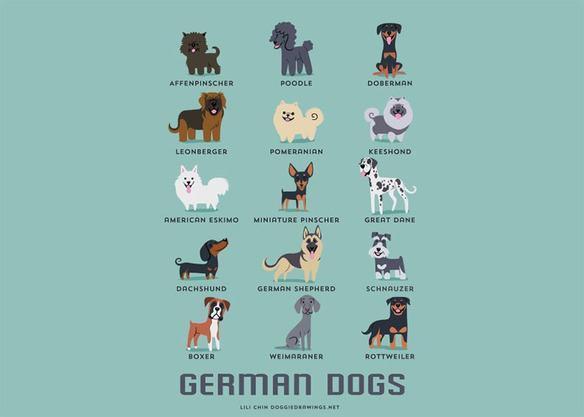200-razas-de-perro-clasificadas-segun-su-pais-de-origen-perros-alemanes