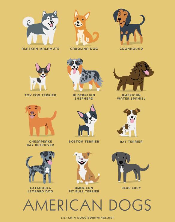 200-razas-de-perro-clasificadas-segun-su-pais-de-origen-perros-americanos