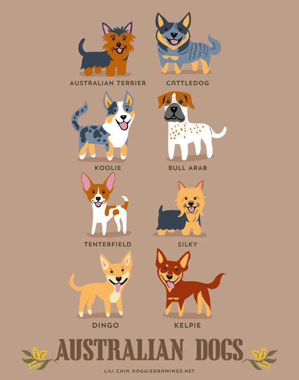 200-razas-de-perro-clasificadas-segun-su-pais-de-origen-perros-australianos