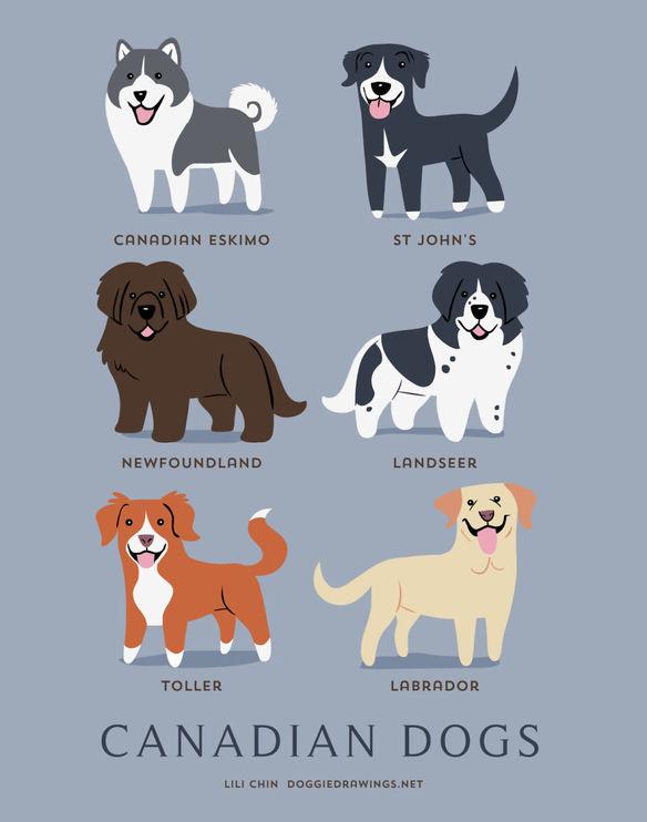 200-razas-de-perro-clasificadas-segun-su-pais-de-origen-perros-canadienses
