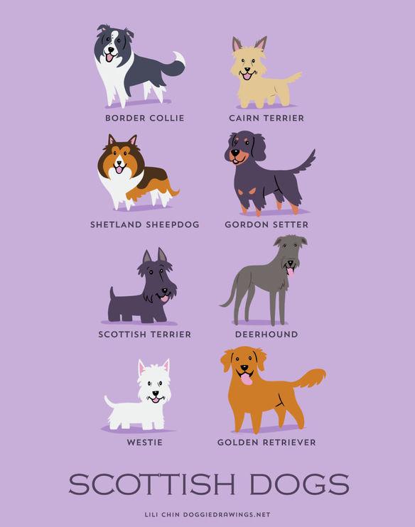 200-razas-de-perro-clasificadas-segun-su-pais-de-origen-perros-escoceses