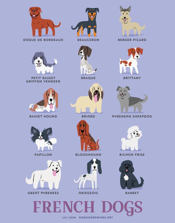 200-razas-de-perro-clasificadas-segun-su-pais-de-origen-perros-franceses