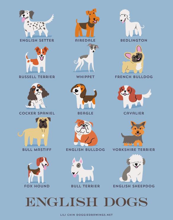 200-razas-de-perro-clasificadas-segun-su-pais-de-origen-perros-ingleses