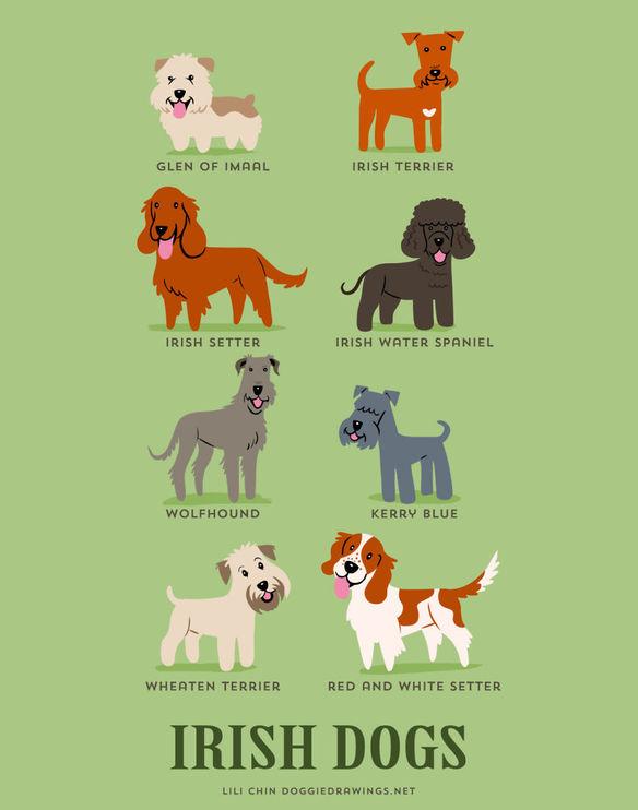 200-razas-de-perro-clasificadas-segun-su-pais-de-origen-perros-irlandeses