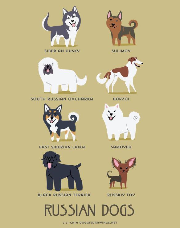 200-razas-de-perro-clasificadas-segun-su-pais-de-origen-perros-rusos