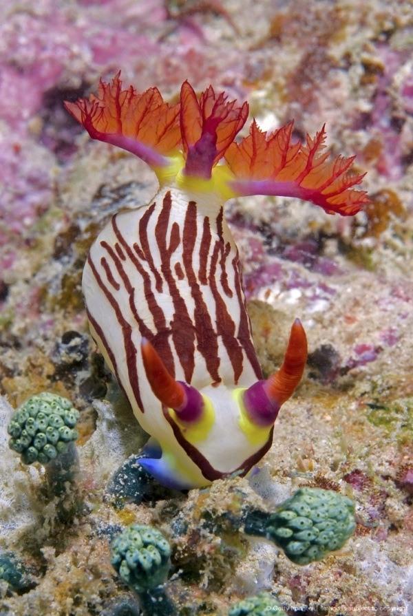 animales marinos moluscos