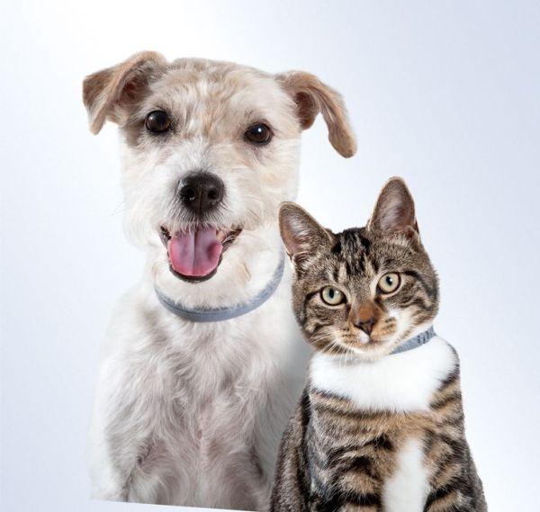 desparasitar perro y gato
