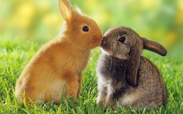 nombres-para-conejos-hembras