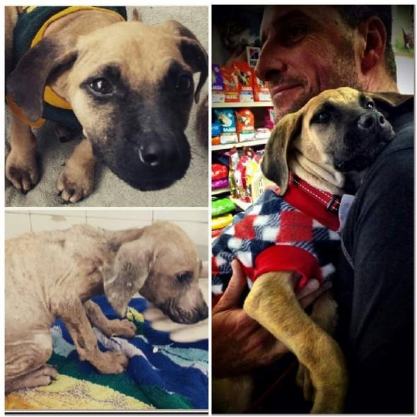 la-impresionante-transformacion-de-un-cachorro-de-3-meses-que-fue-encontrado-en-la-basura-enzo