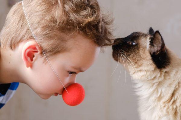 Mascotas hipoalergnicas