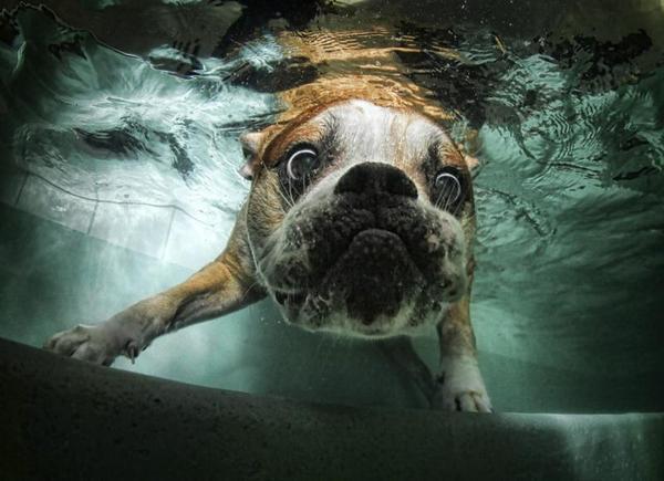 piscina-para-perros-agua