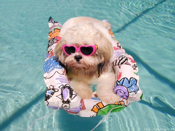 piscina-para-perros-flotador