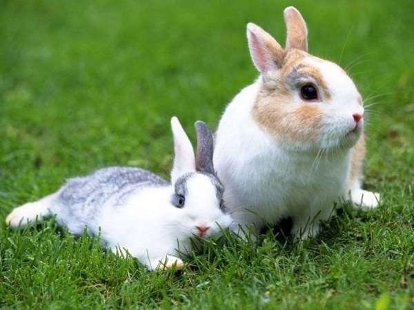 Animales que son Herbívoros