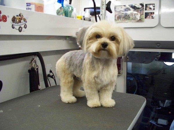 cortar-el-pelo-al-perro