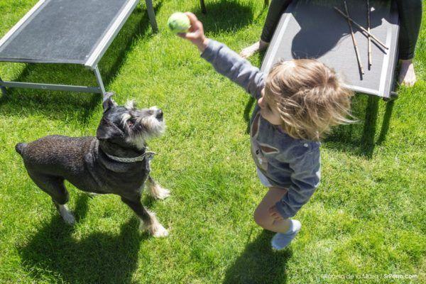 juegos-de-navidad-para-mascotas-al-aire-libre