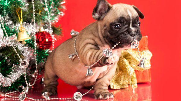juegos-de-navidad-para-mascotas-pug