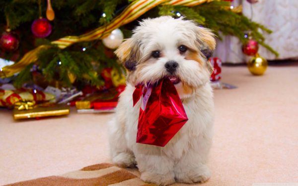 regalar-mascotas-para-navidad