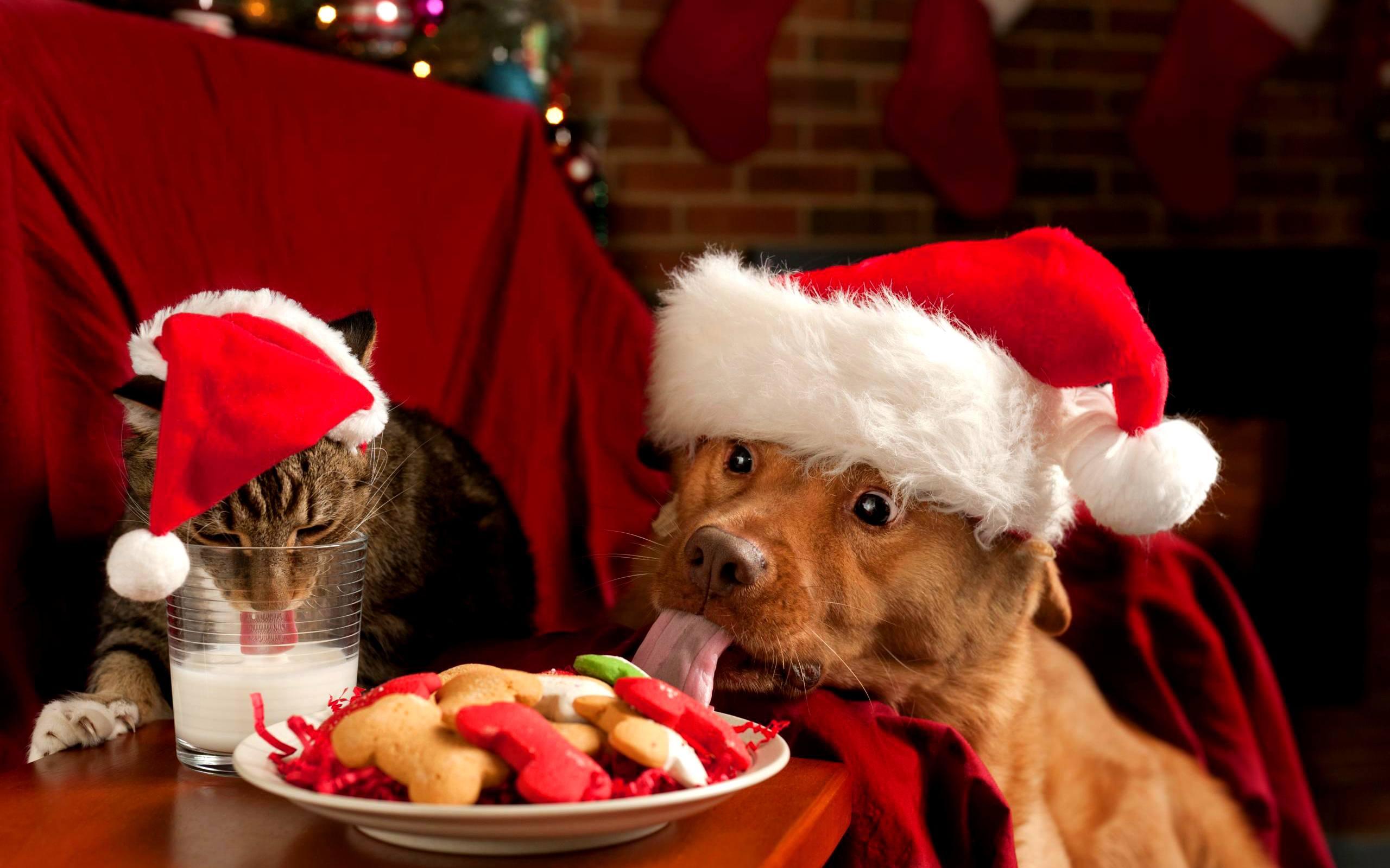 La Navidad y las mascotas - AnimalesMascotas