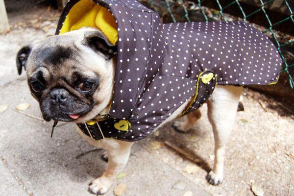 ropa-de-navidad-para-mascotas-abrigo